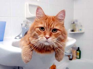Fare il bagno al gatto i consigli di donnola tizia - Fare il bagno al gatto ...