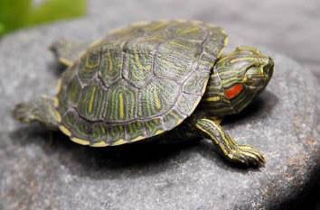 illuminazione dell acquaterrario per tartarughe i