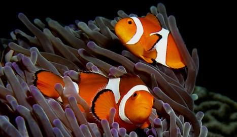 Allestimento acquario di pesci rossi for Contenitore per pesci