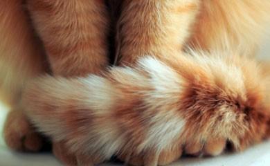 notizie animali, gatto morde coda, problemi comportamentali del gatto, veterinario comportamentalista
