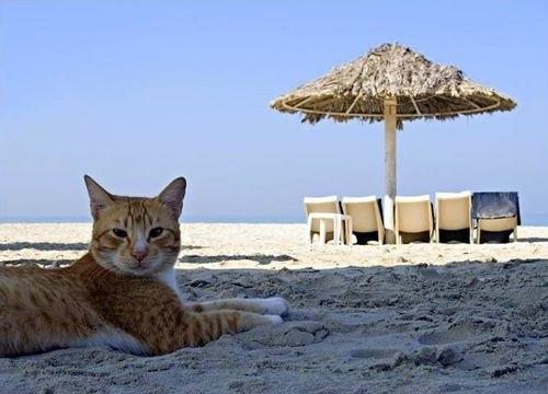 Portare il gatto in vacanza al mare ecco cosa fare per - Gatto solo in casa per 15 giorni ...