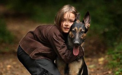 notizie animali, avvicinarsi a un cane,cane,cani,cani e bambini