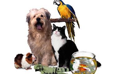 notizie animali, enpa, enpa consigli protezione animali, proteggere gli animali dal caldo, animali domestici, cane, gatto,pesci,furetto, cavie