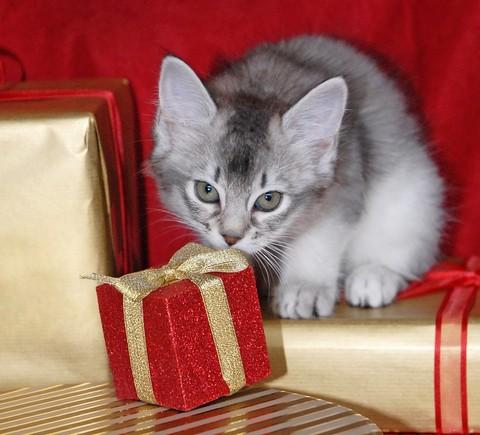 Natale sicuro per gli animali domestici i consigli di for Animali a natale
