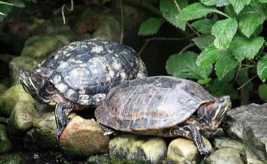 Bambini e tartarughe non una combinazione vincente ma for Tartarughe grandi
