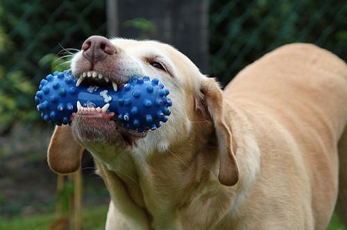 notizie animali, dog sitter, diventare dog sitter, dog walker, lavorare con i cani, lavoro dog sitter