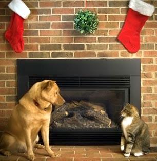 Piante velenose per cani e gatti i consigli di donnola tizia for Piante velenose per i cani