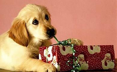 Feste sicure per gli animali domestici i consigli di for Animali a natale