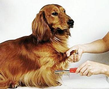 Antipulci naturale per il cane i consigli di donnola tizia - Bagno cane dopo antipulci ...