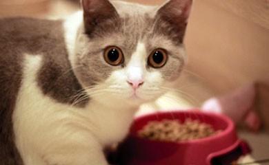 Tutorial bau boys rimedi contro i parassiti dei gatti for Cosa mangia il gatto