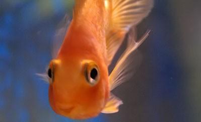 acquario per il pesce rosso i consigli di donnola tizia