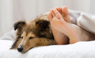 ostelli pet-friendly,vacanze con gli animali,viaggiare con gli animali