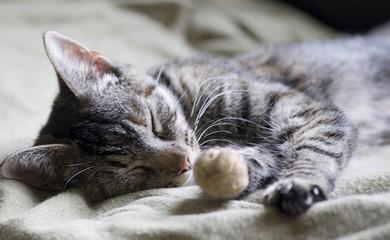 Il Sonno Dei Gatti Quando Dormono E Perché I Consigli Di Donnola