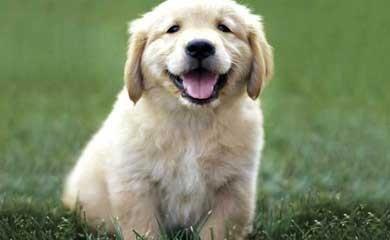 cucciolo.jpg