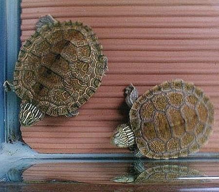 Acquaterrario per tartarughe i consigli di donnola tizia for Contenitore tartarughe