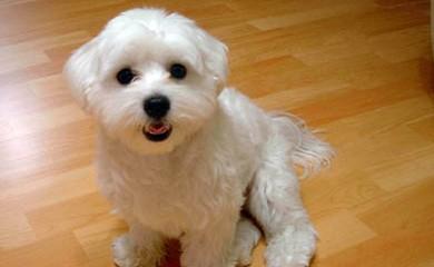 Allergia Al Pelo Del Cane E Cani Che Perdono Poco Pelo I Consigli