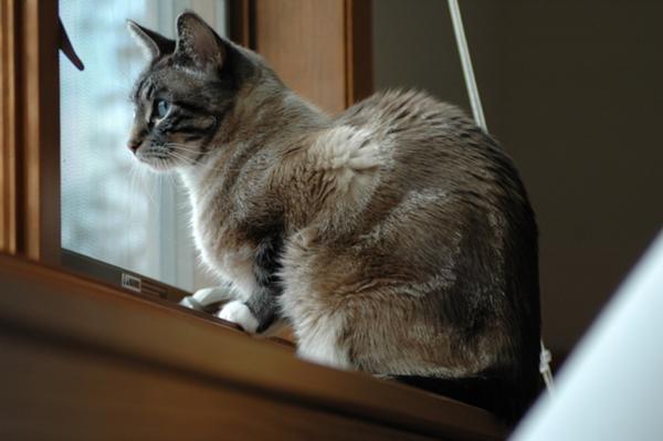 Stimolazione Visiva Per Il Gatto Che Vive In Casa Accesso