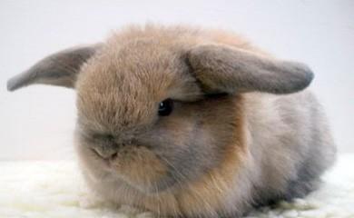 Convivenza dei conigli nani i consigli di donnola tizia - Casetta per conigli ...