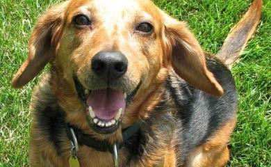 Adottare un cane da un canile i consigli di donnola tizia - Portare il cane al canile ...