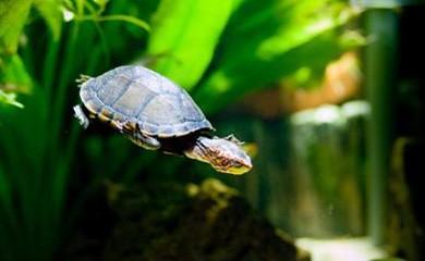 L importanza dell alimentazione per la tartaruga acquatica for Contenitore tartarughe