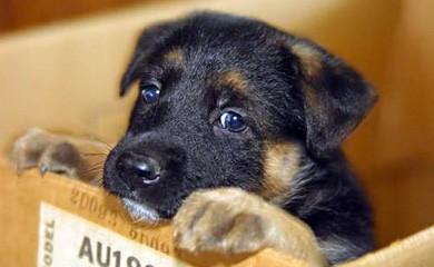Come vivere felici con un animale disabile ottobre 2012 - Cane occhi azzurri ...