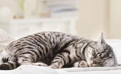 notizie animali, gatto che dorme, gatto dorme sempre, sonno dei gatti, quanto dormono i gatti